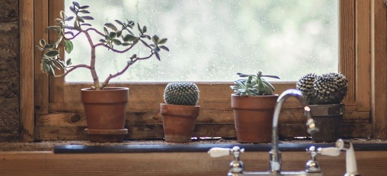 plants you can use when decorating a rental apartment